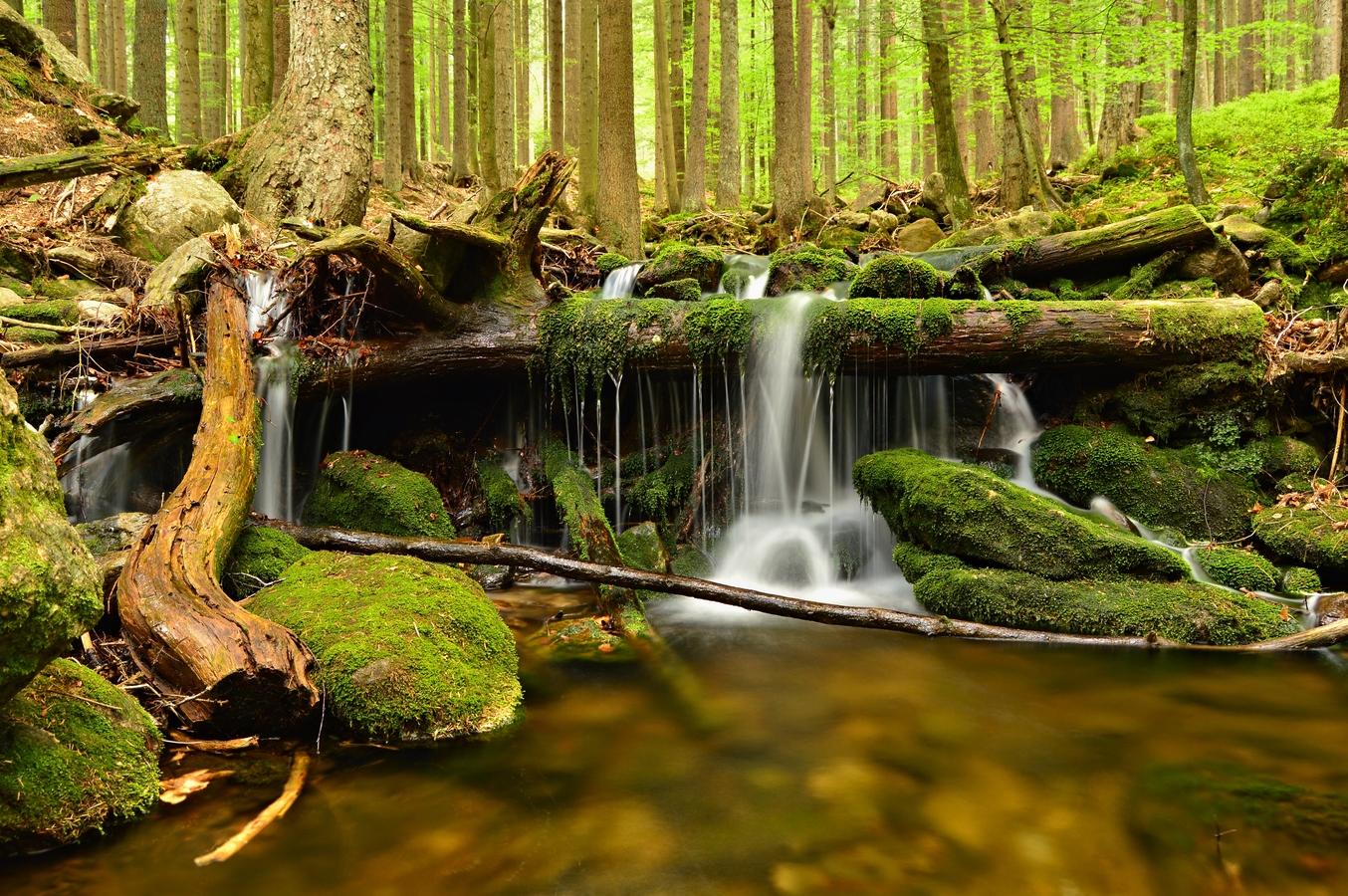 Šumavská příroda
