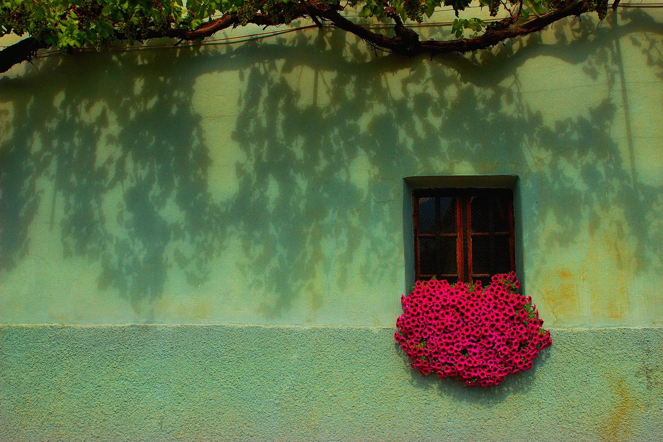 Květiny v okně