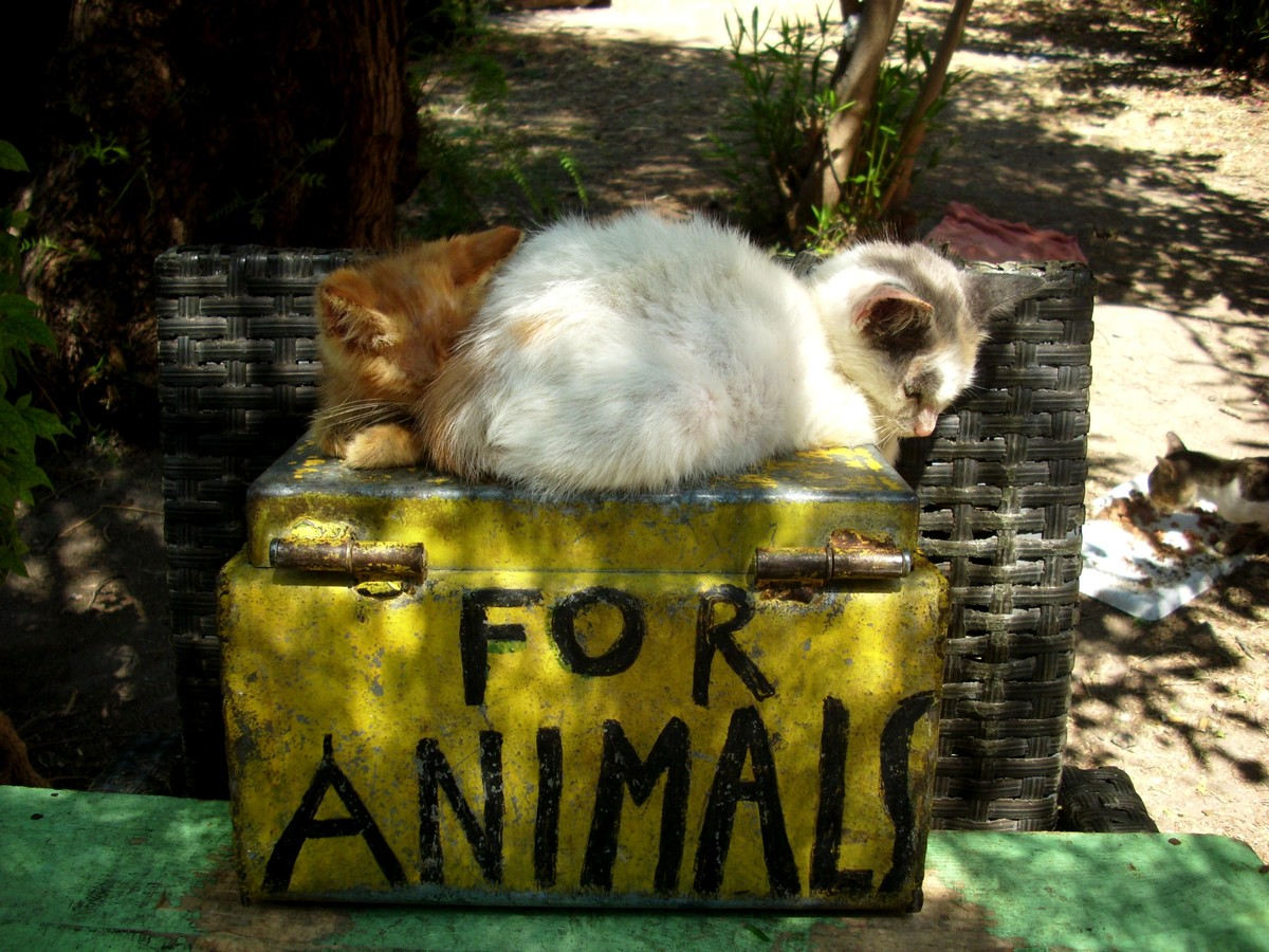 For animals...