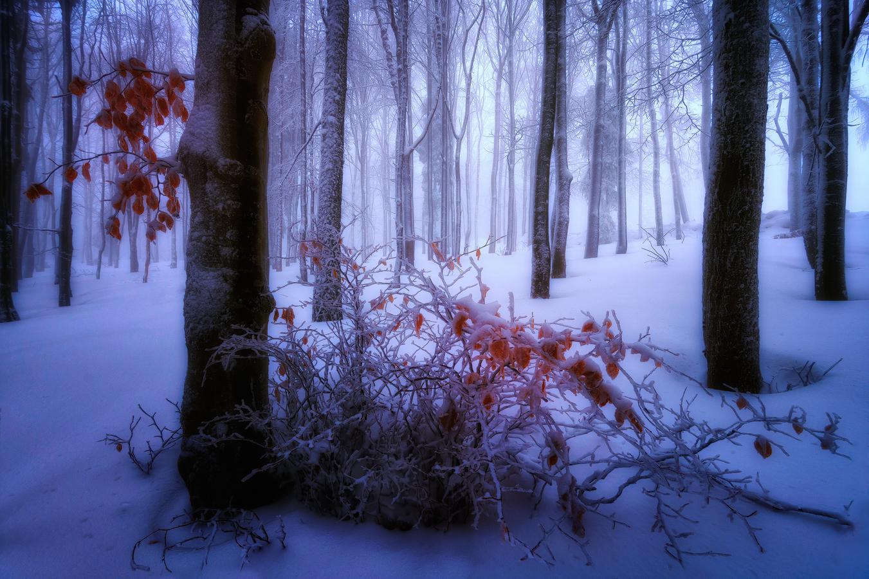 Zimné kontrasty