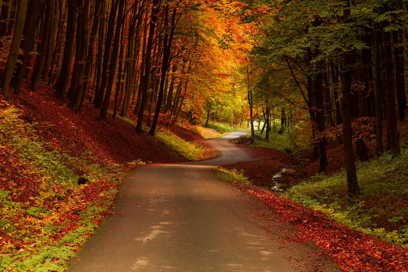 Karpatským lesom