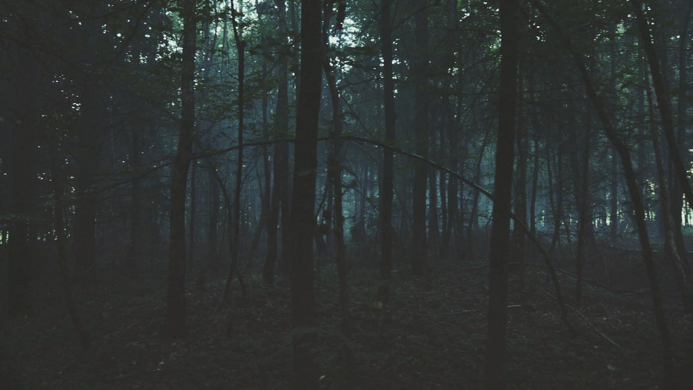 Stmívání lesa