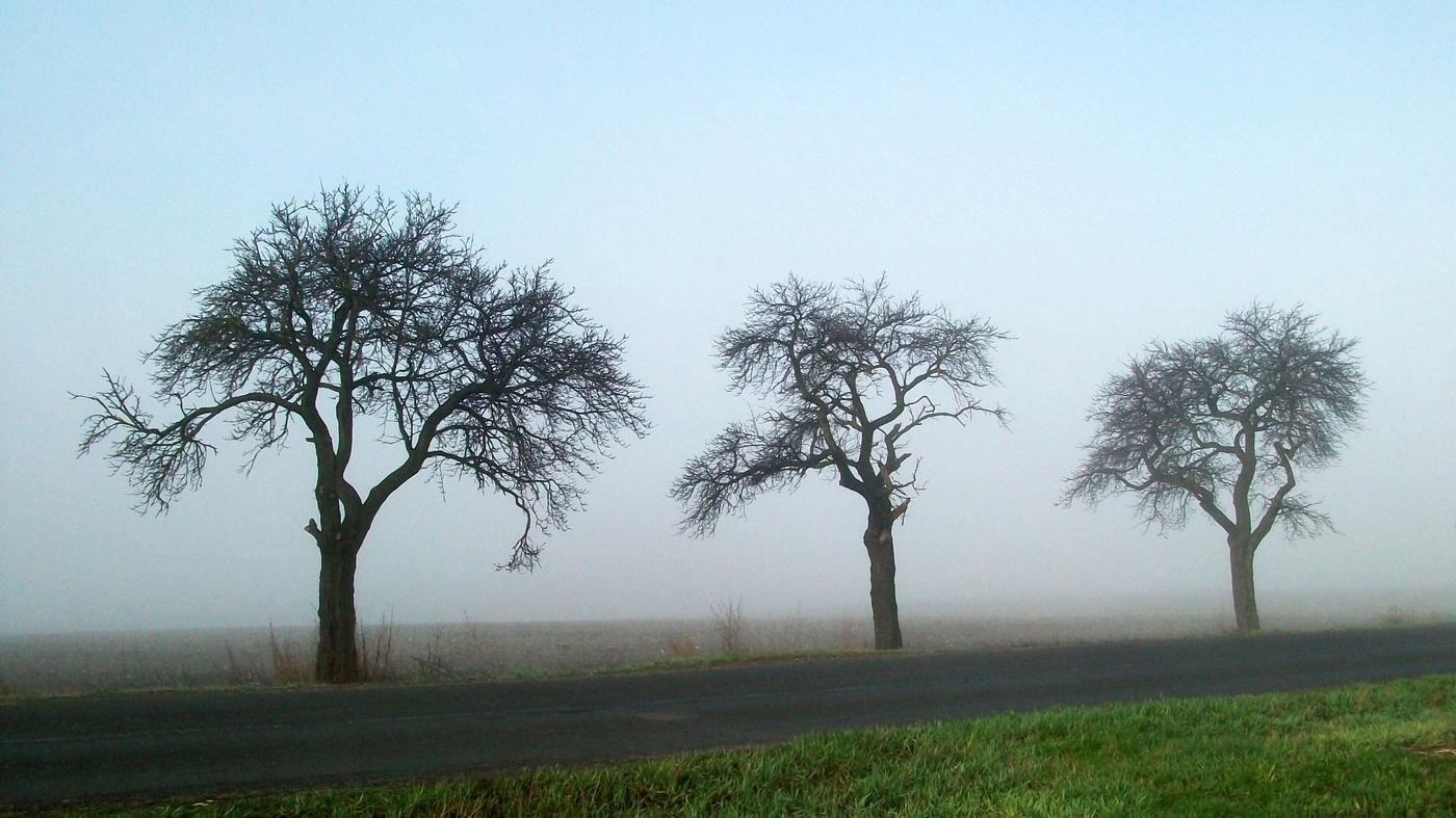 Podzim u silnice