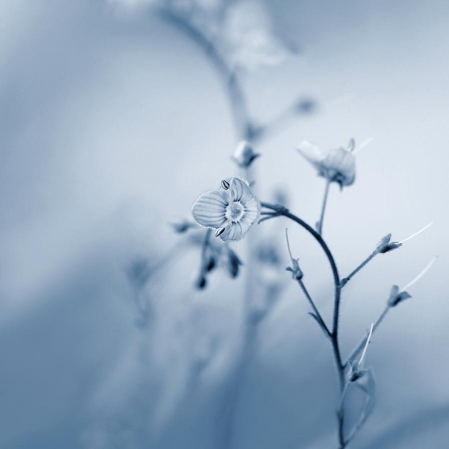V modrém -