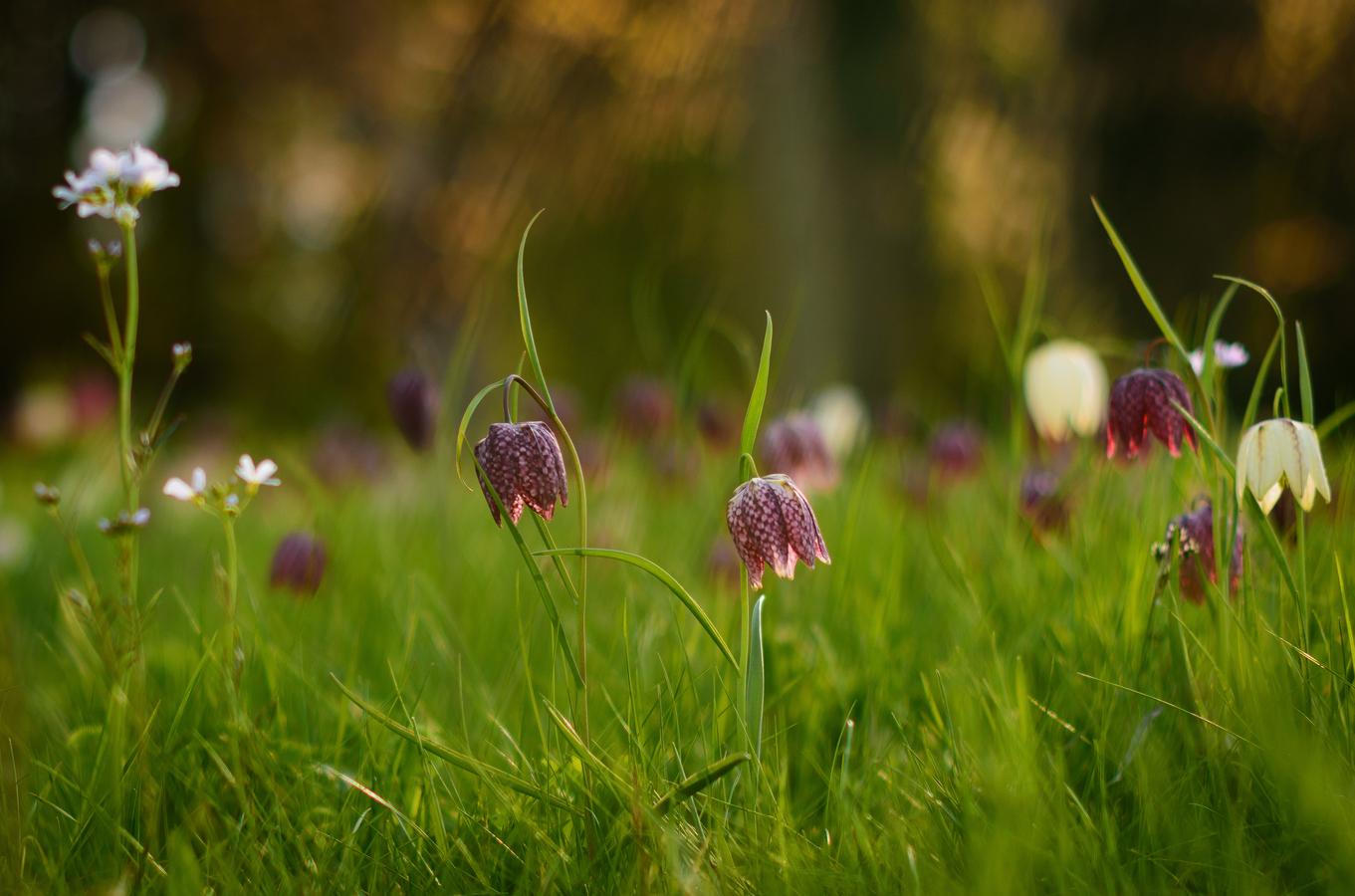 Na rozkvetlé louce