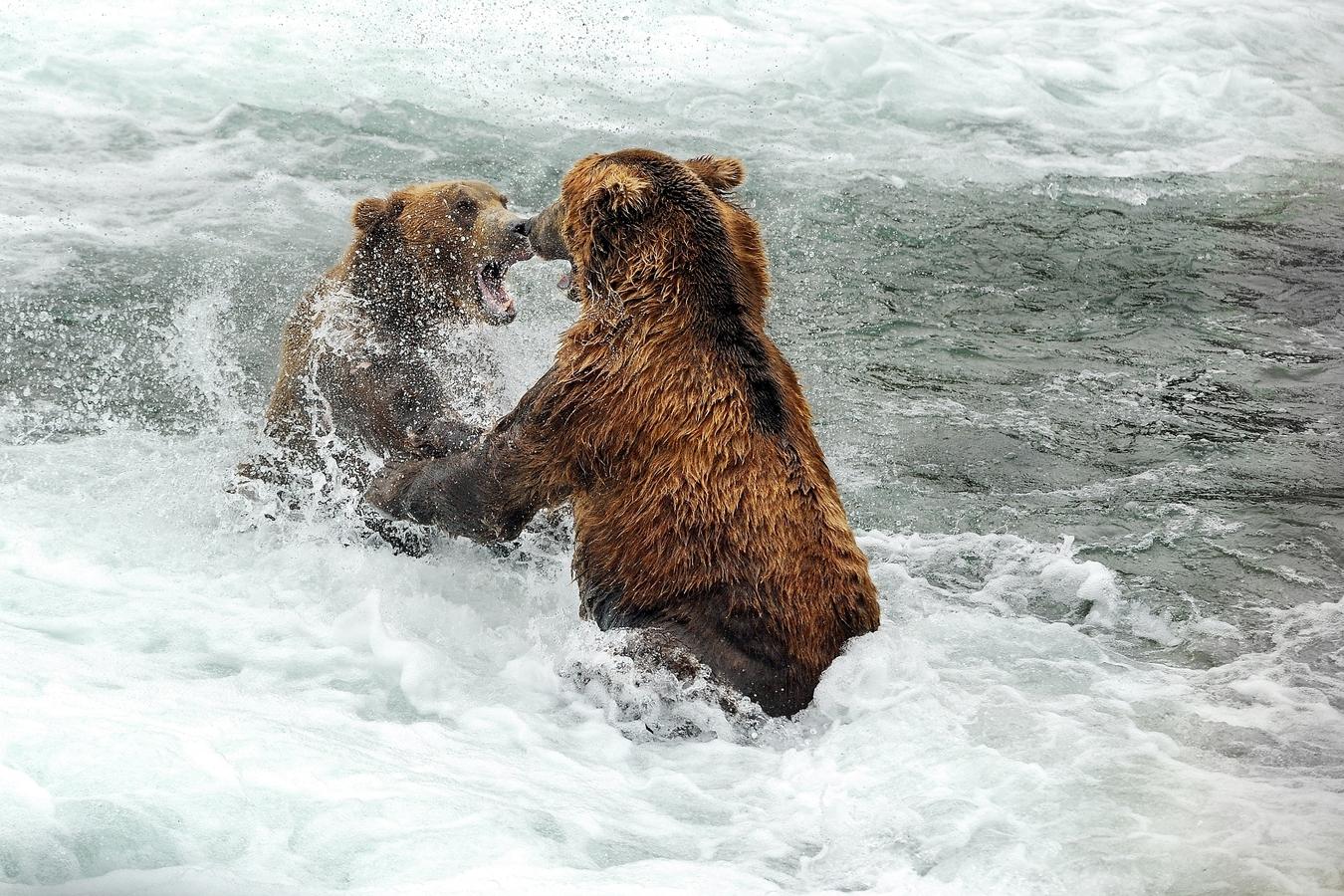 výměna názorů po grizzlyovsku :-)