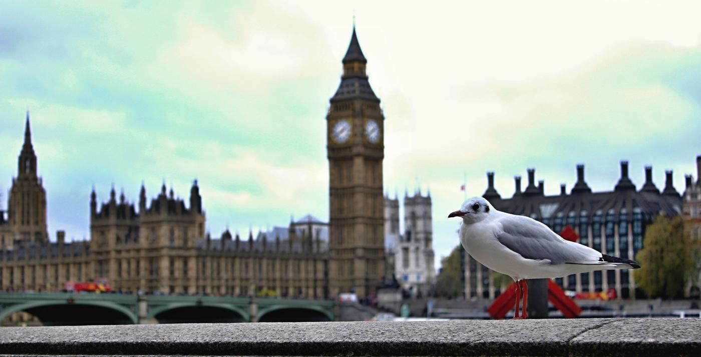 Ptactvo Londýna