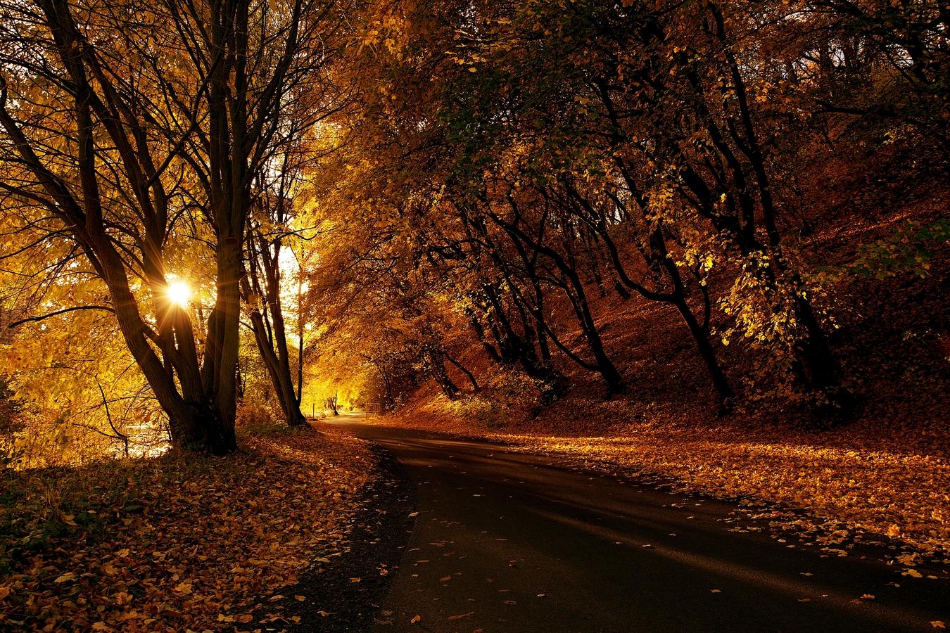 Zlatavý podzim