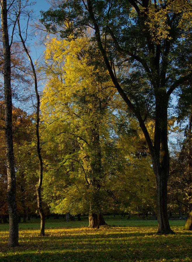Buk a podzim