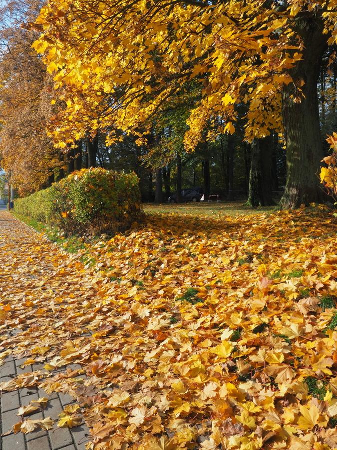 Podzimní park.