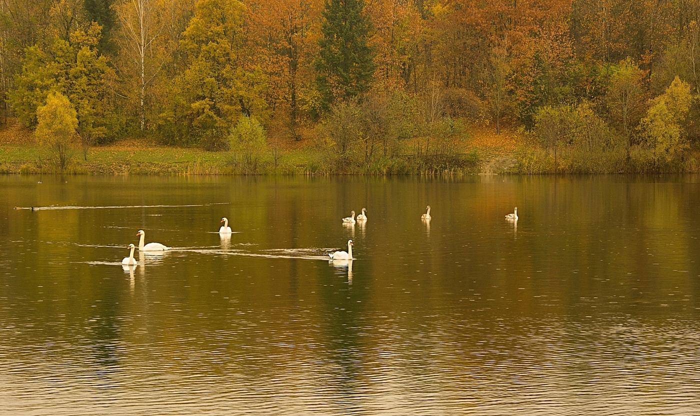 labutí jezero ...