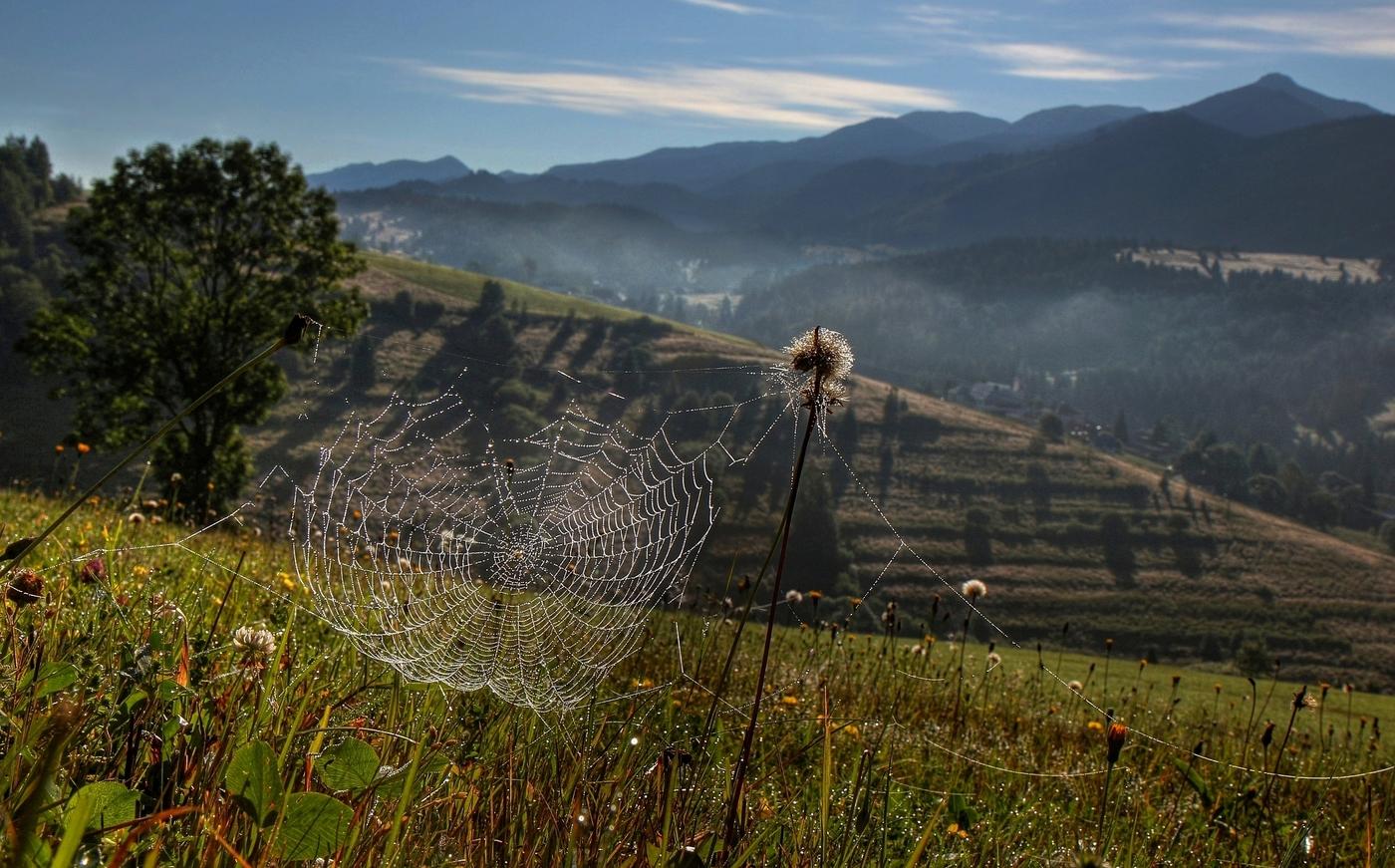 Pavučinkové ráno
