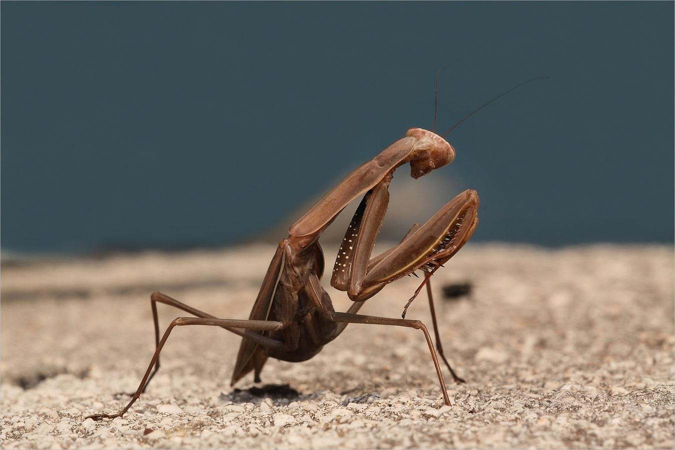 Bude mi ta moucha stačit k obědu?