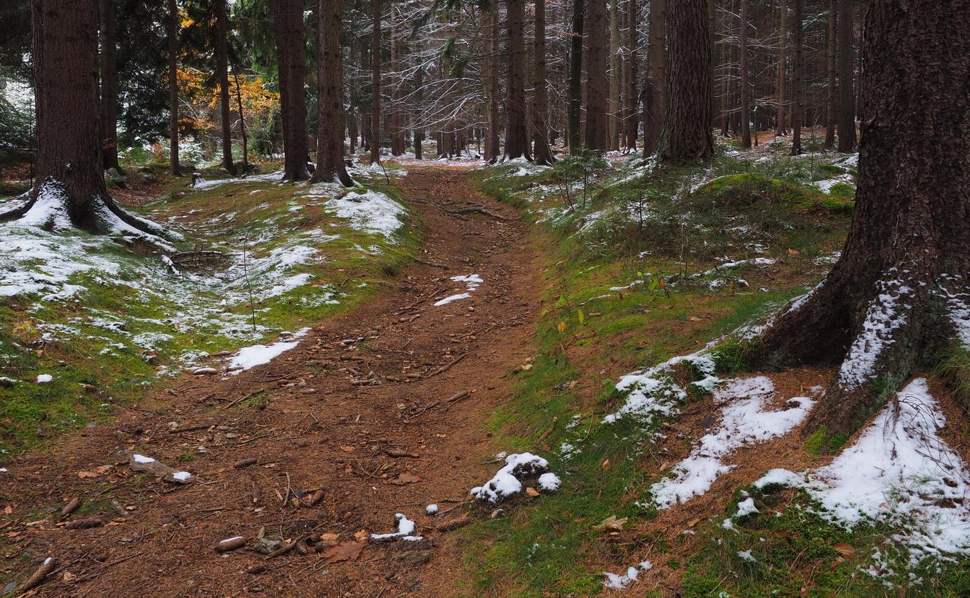 Lesní cesta za zimou...