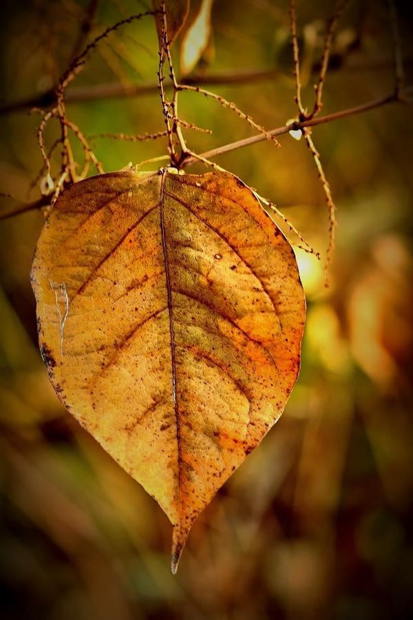 Zlatý list,podzimní