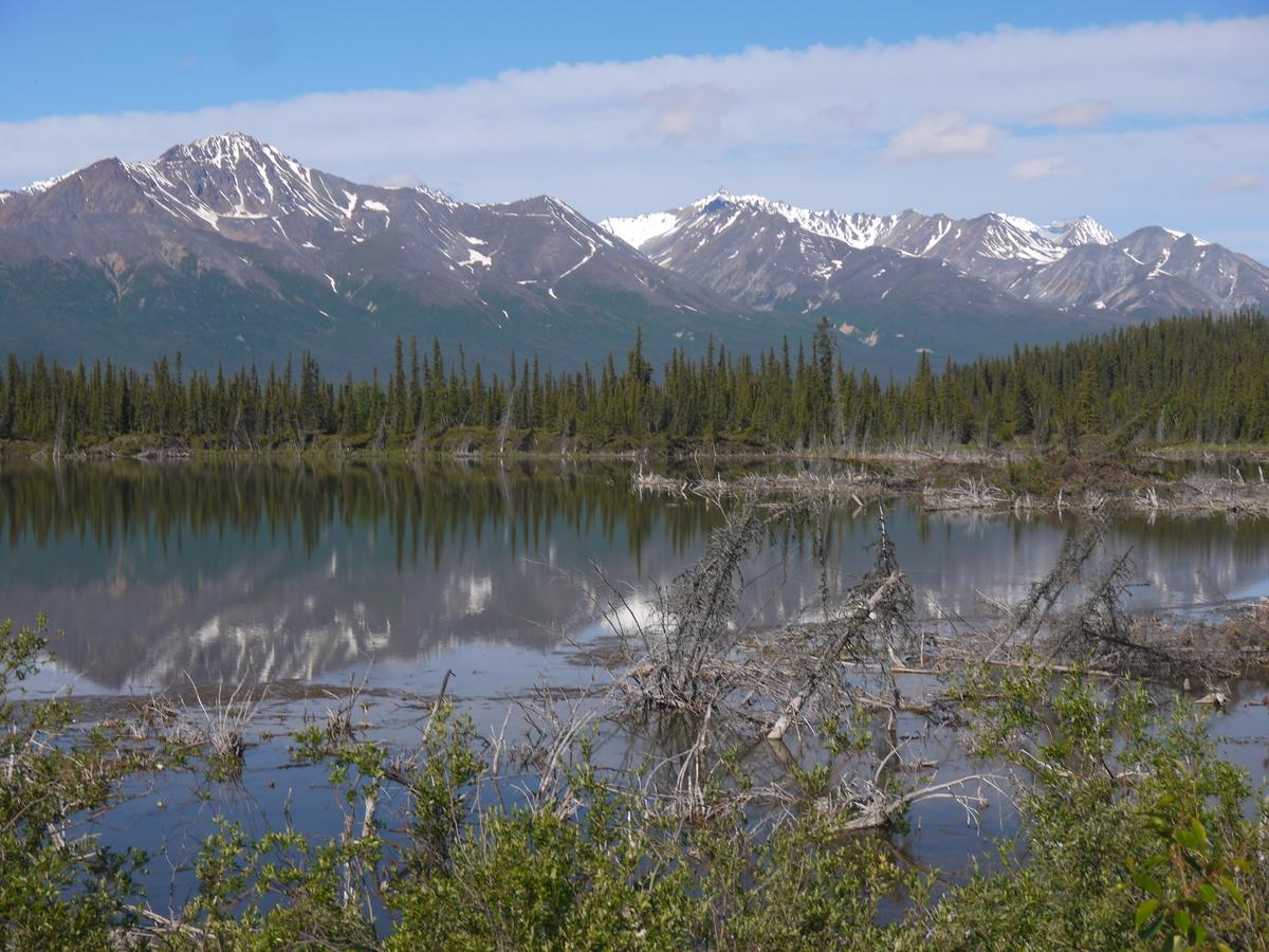 Léto na Aljašce.