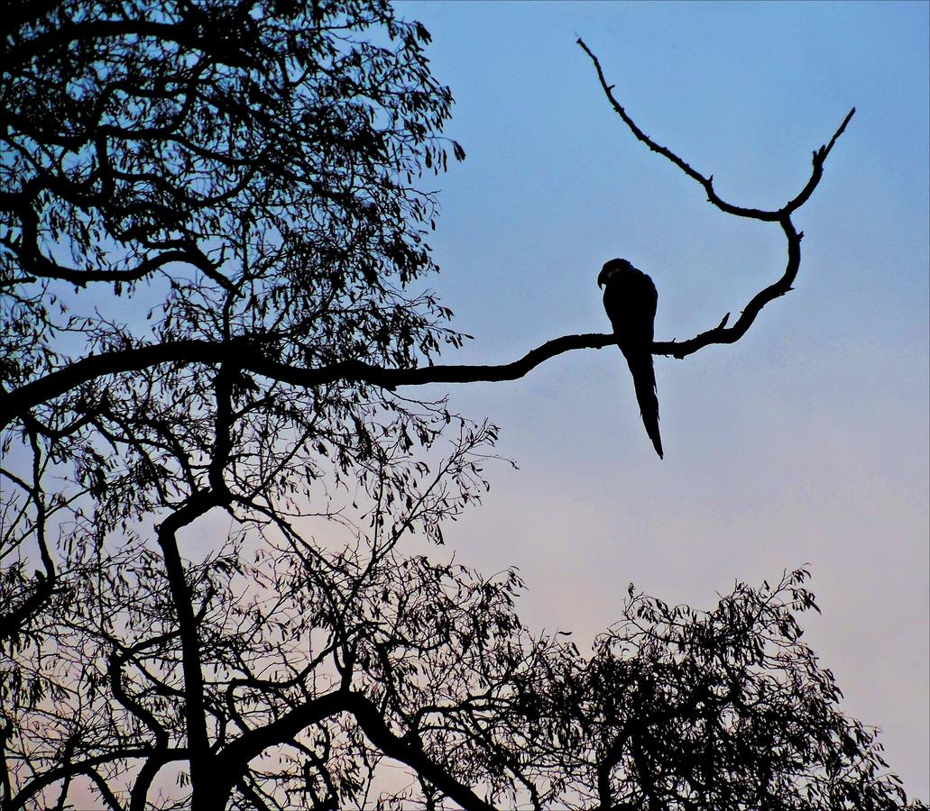 Papoušek na procházce.