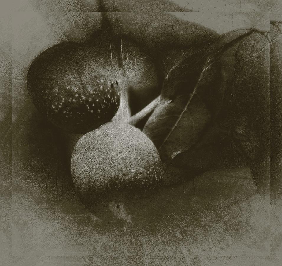 Ořechové zátiší - fotografika