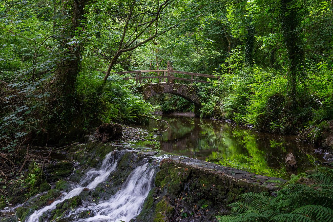 Forest park léto