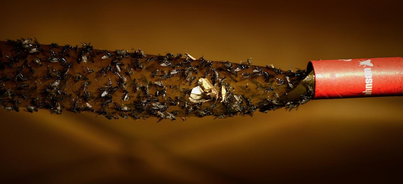 ...Z NEživota hmyzu...