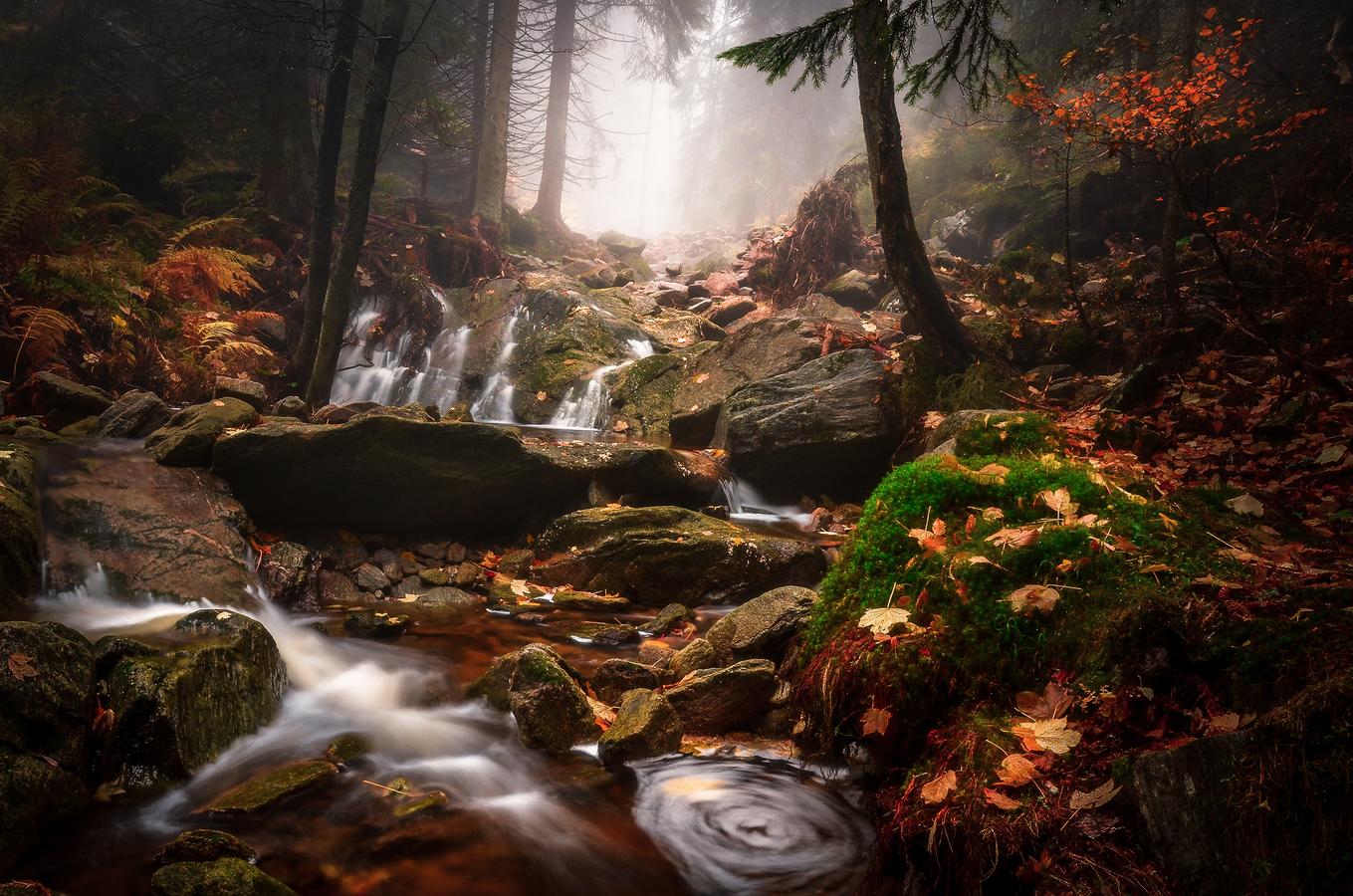 Z Českých lesů