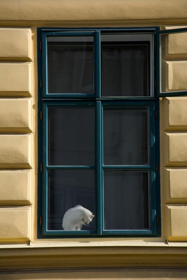 Kočka na okně