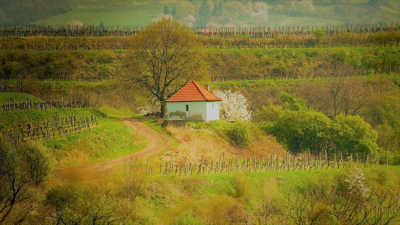 Jaro na vinici