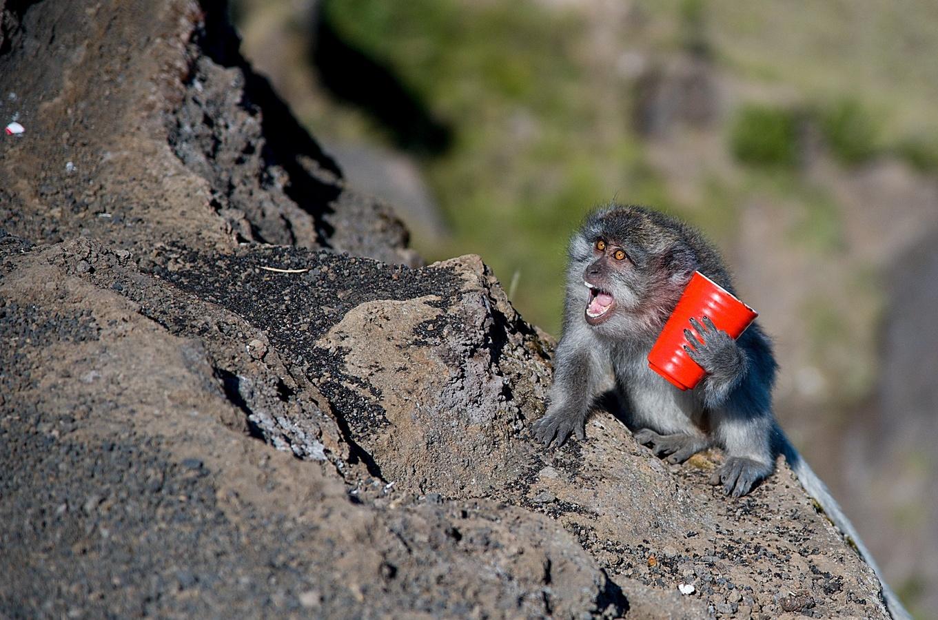 Sopečná opice