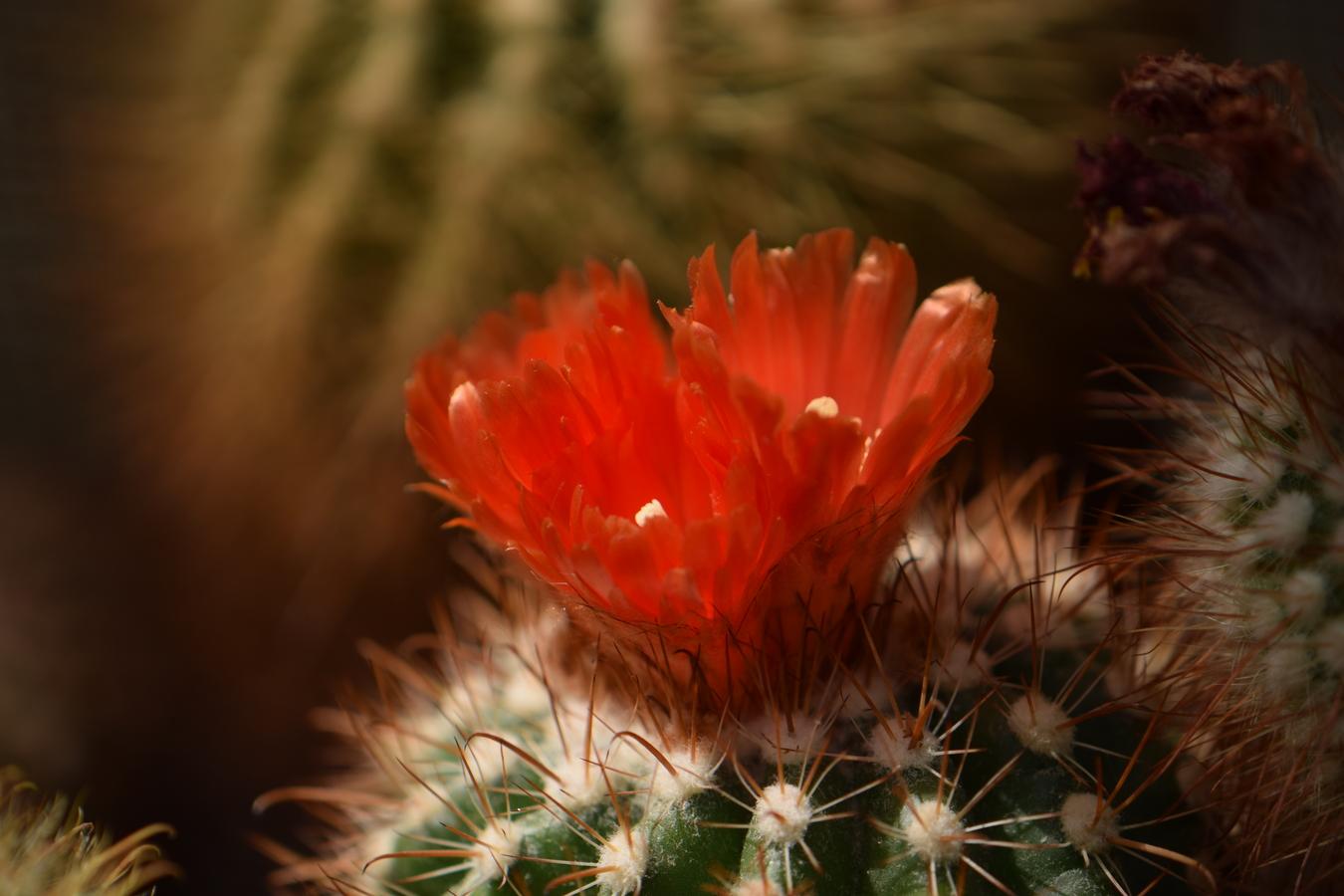 oranžová záře