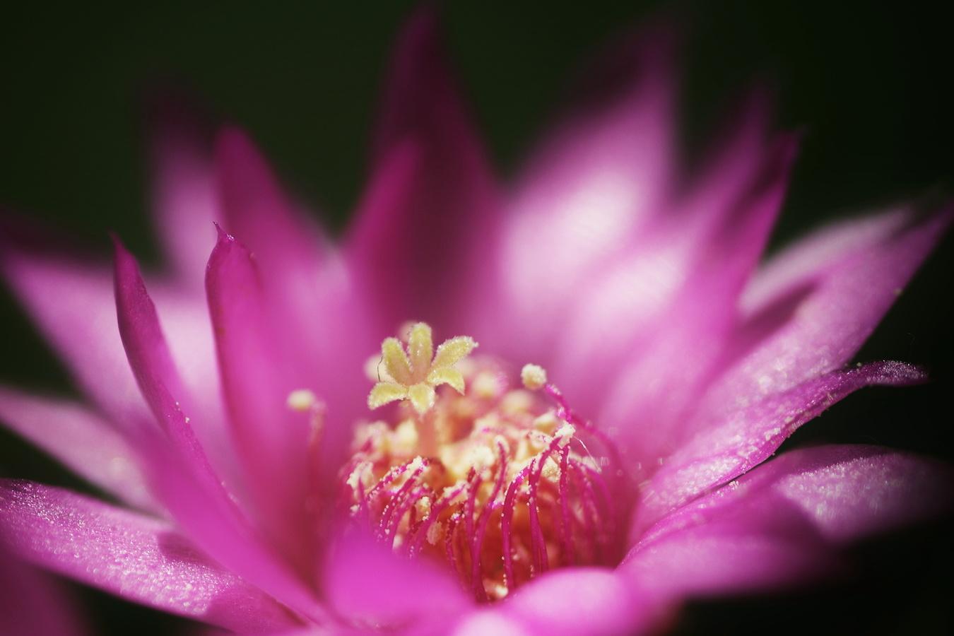 Květinka v květince