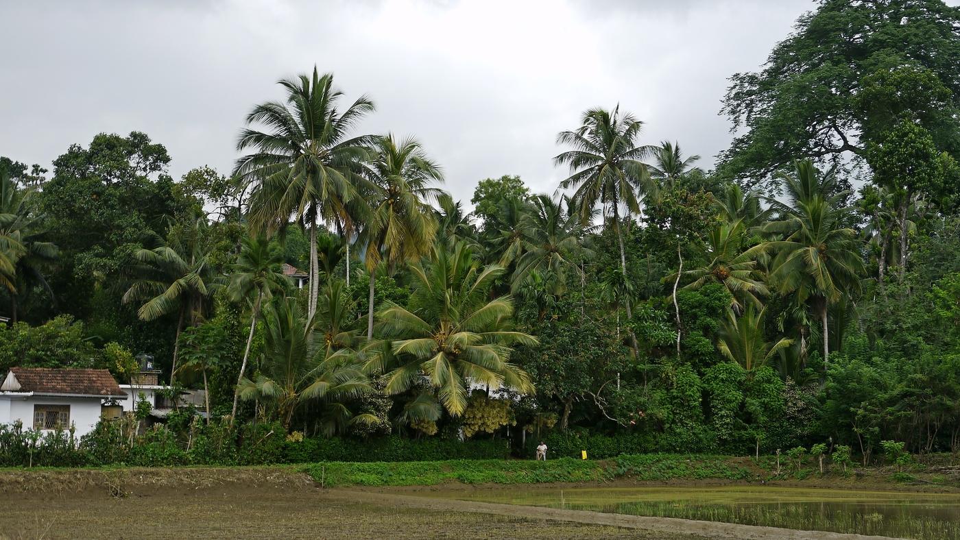 Chalupář na Srí Lance