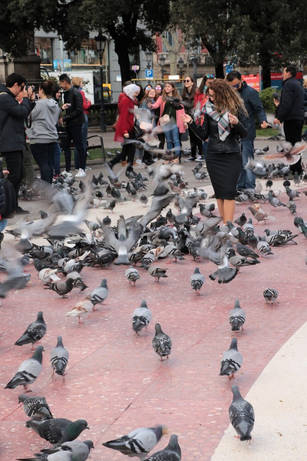 krmení holubů na Placa de Catalunya