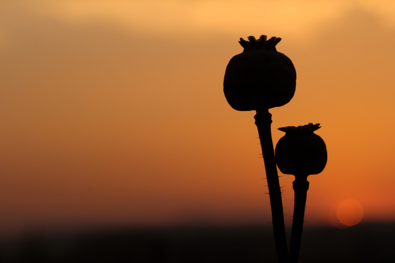Matka a syn sledují západ slunce