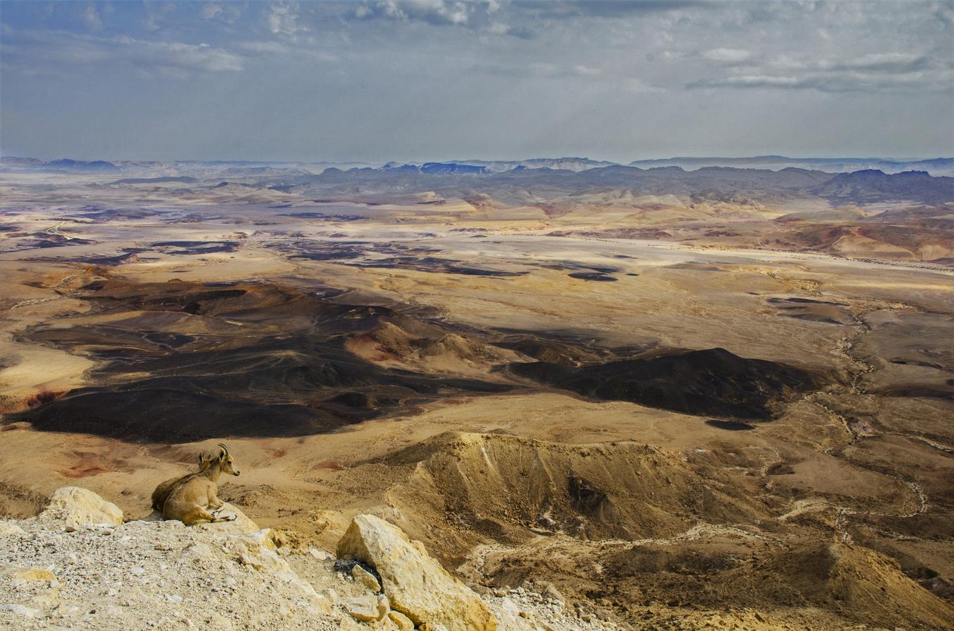Negevská poušť