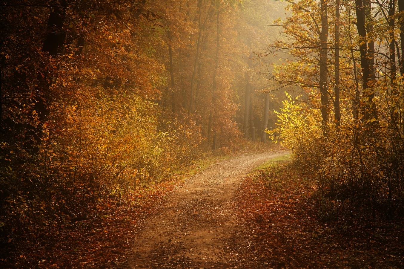 Lesní cestou do nezáma