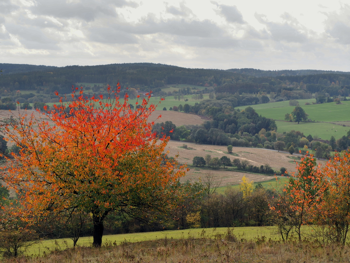 Podzimní třešeň