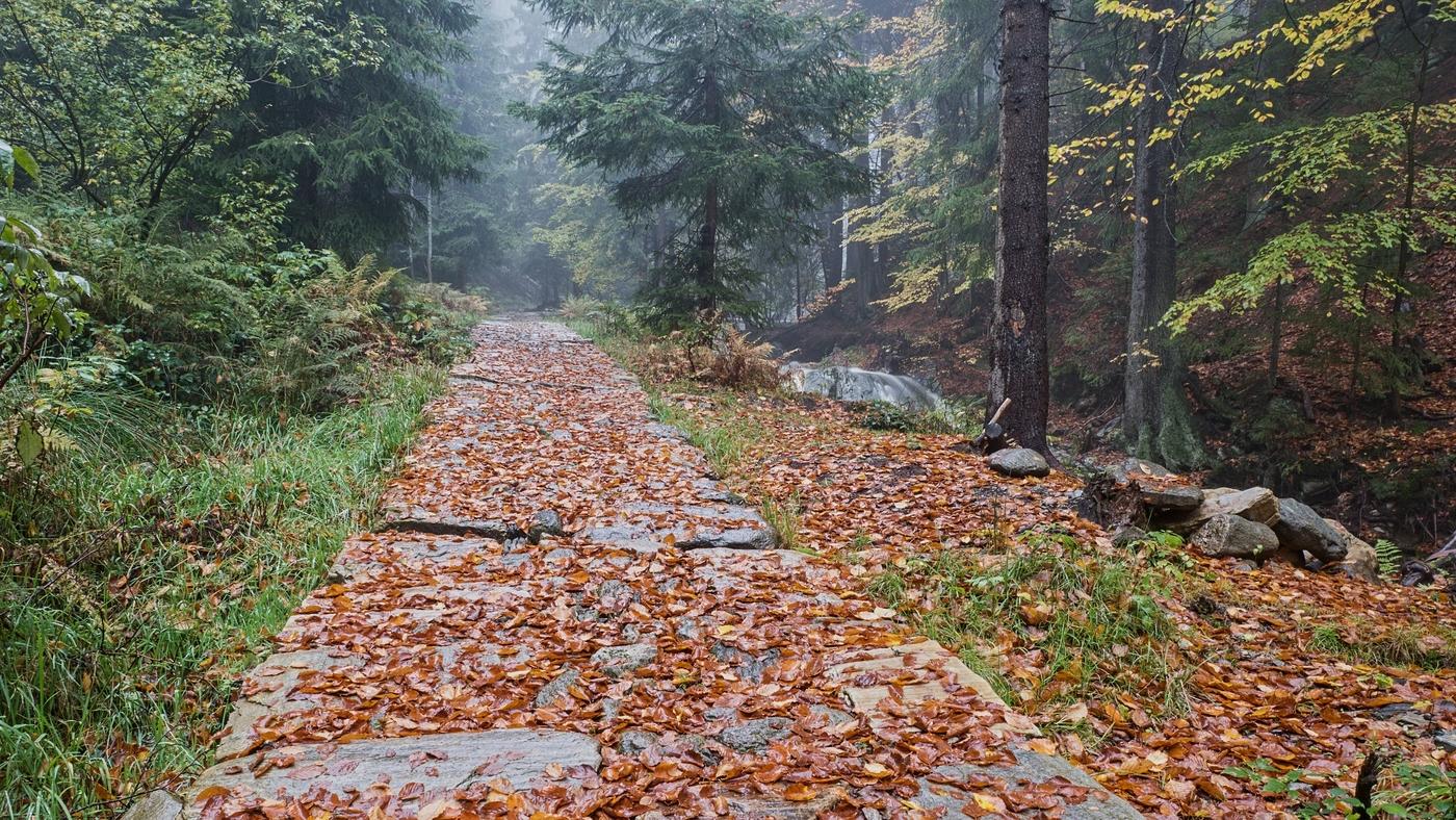 Lesní cestou