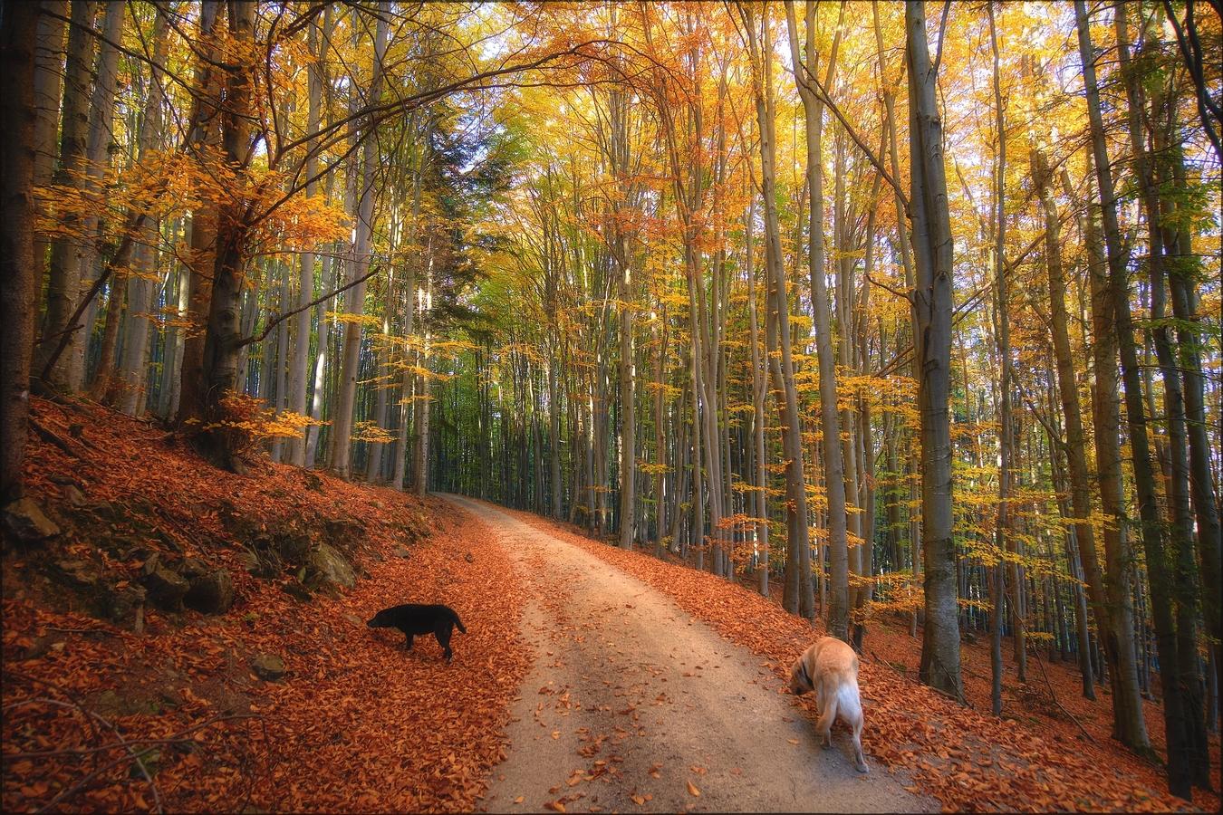 Po cestách podzimu VIII