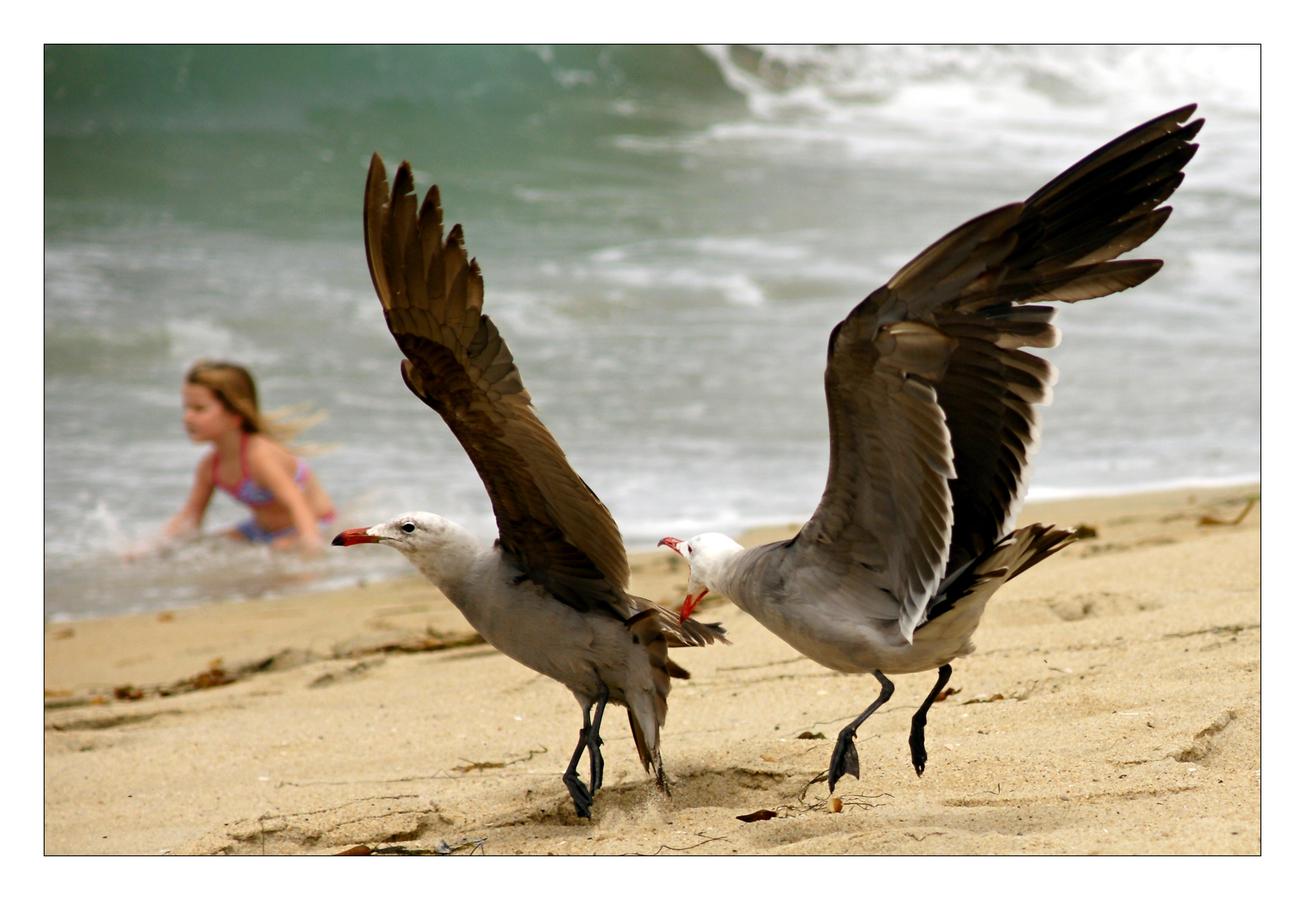 Racci na pláži