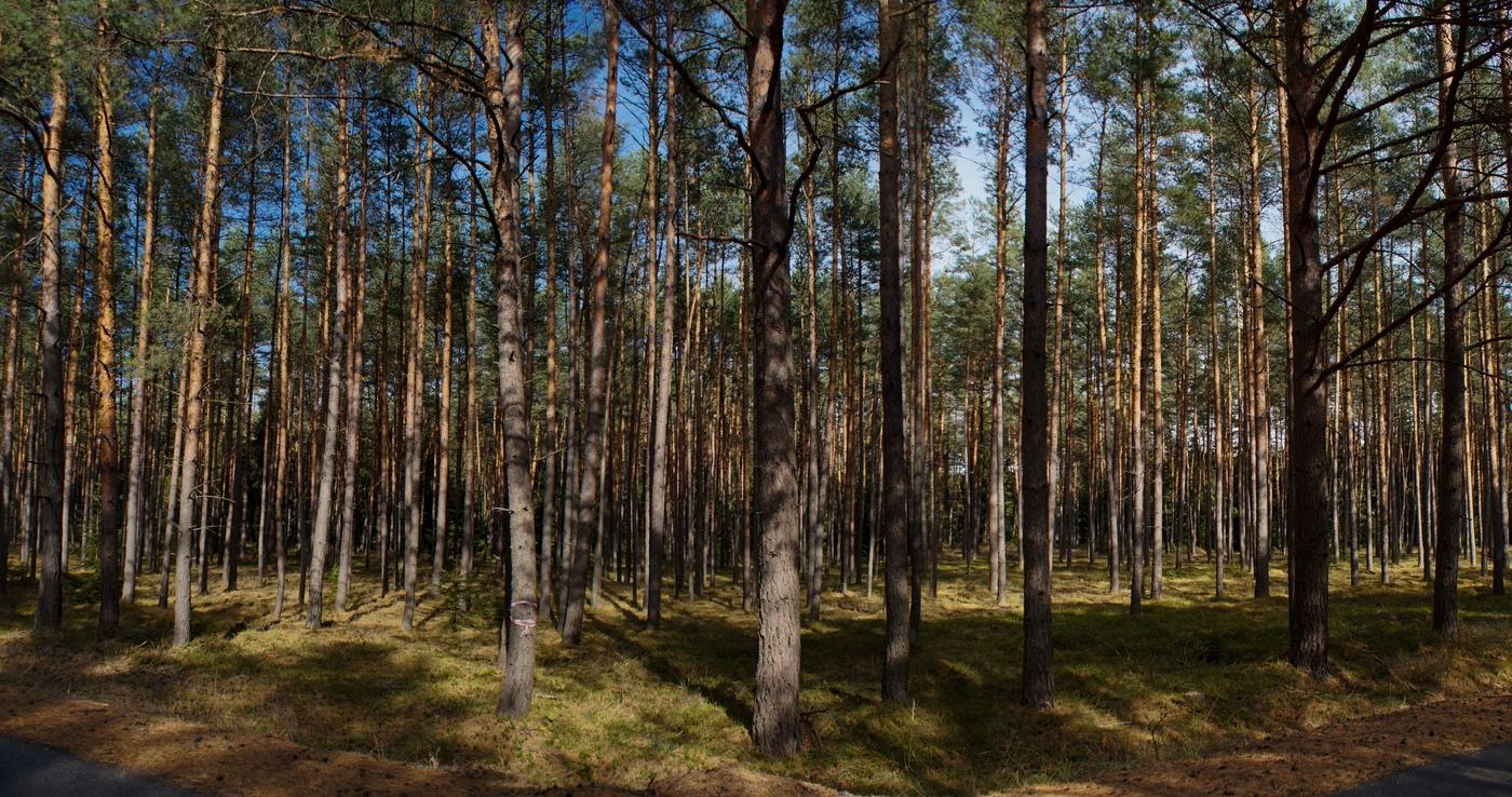 Jako dříví v lese