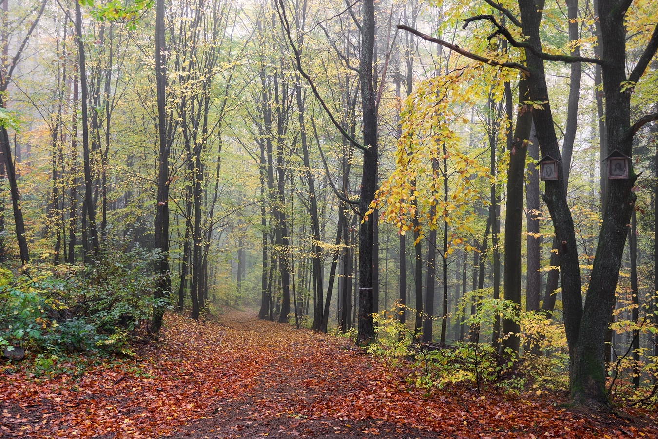 Za mlhy v lese