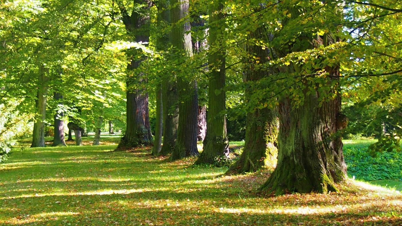 Alej stromů staletých stařešinů