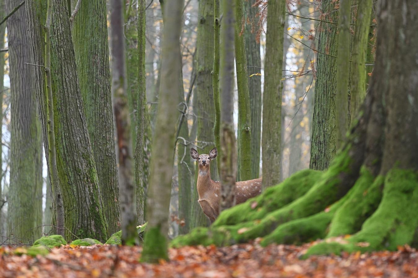 letošní podzim v přírodě (7)