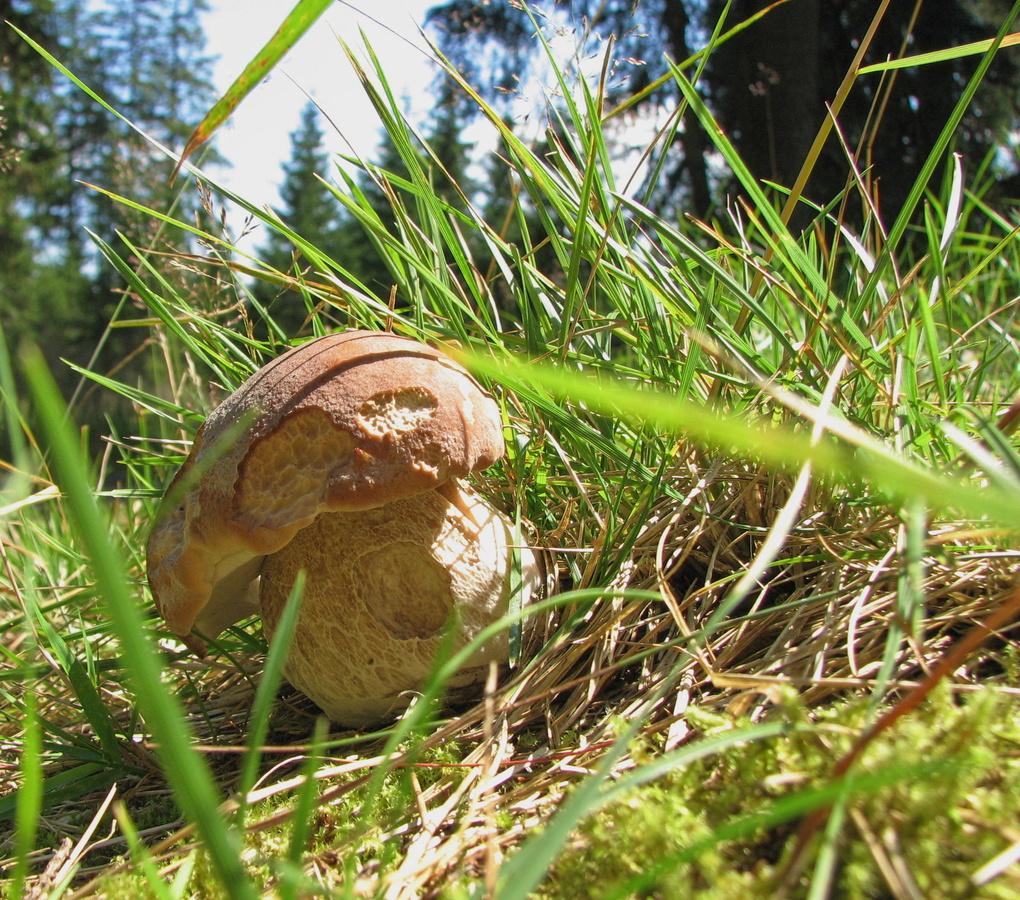 Nadělení v trávě