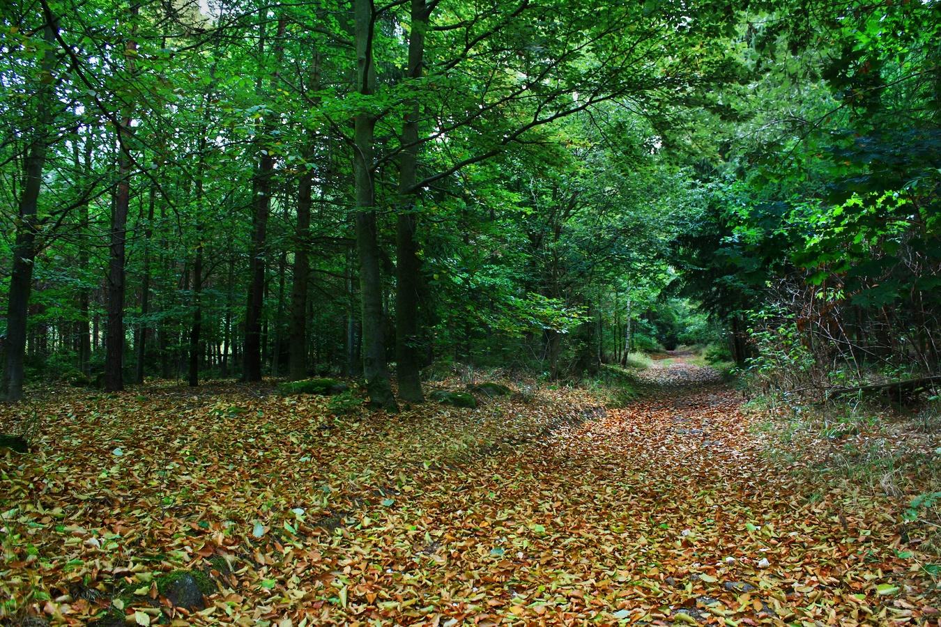 Napříč lesem