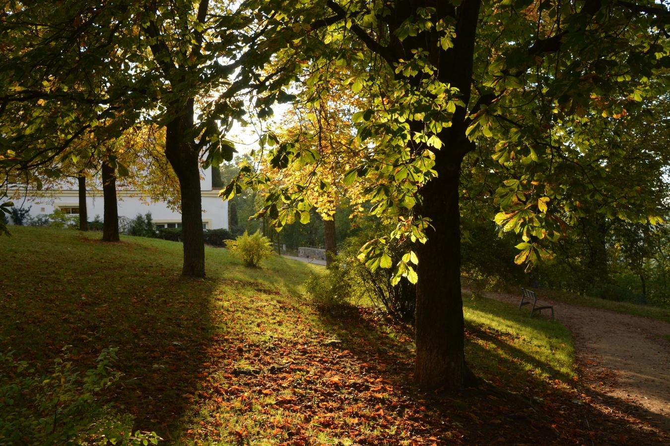 Podzim pod kaštany