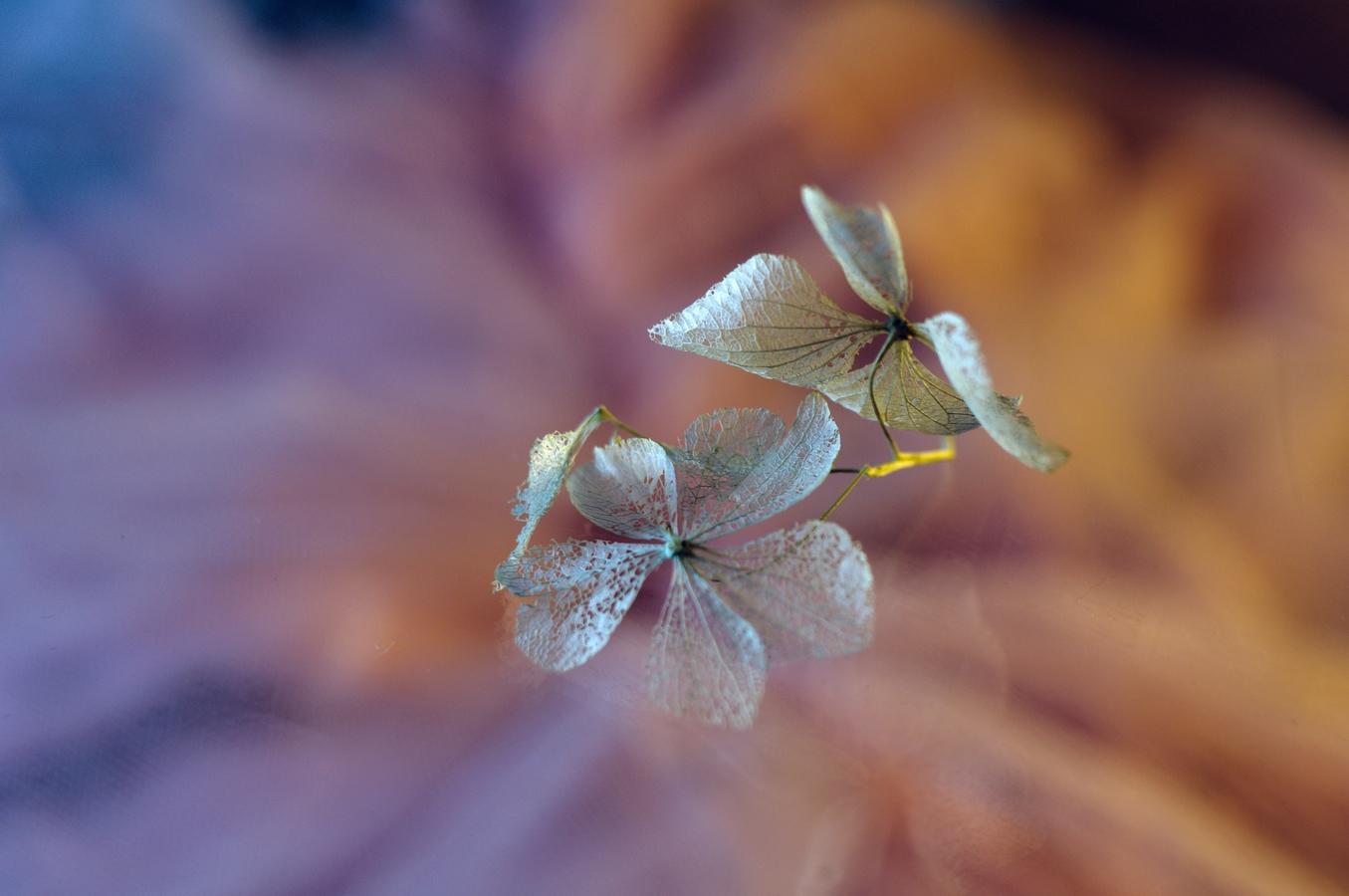 Jesenná drobnôstka
