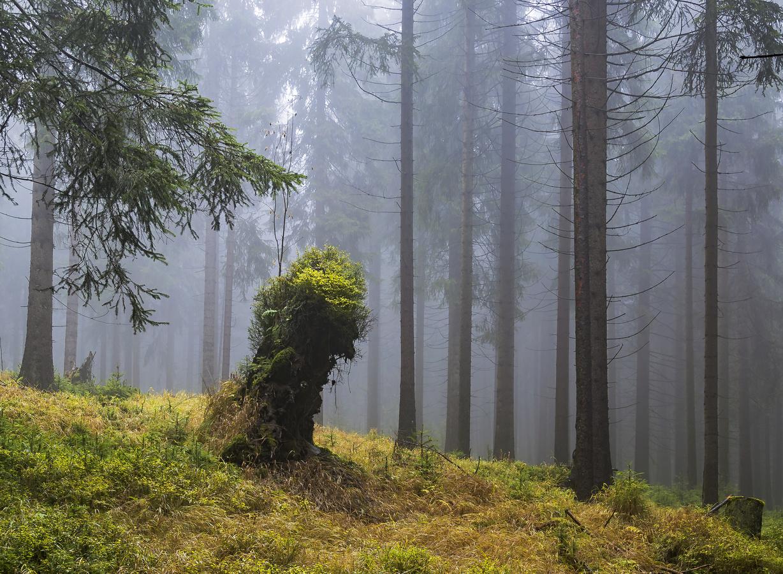 Duch lesa...