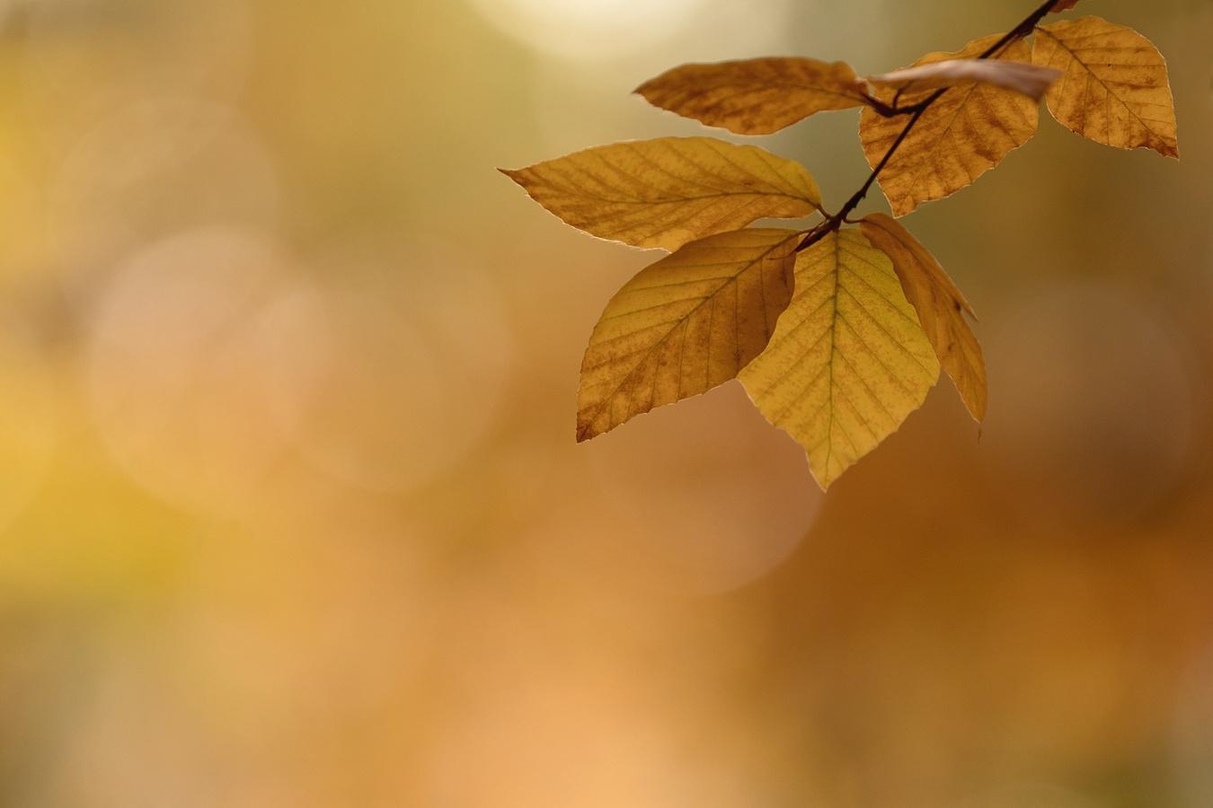 V podzimních bučinách