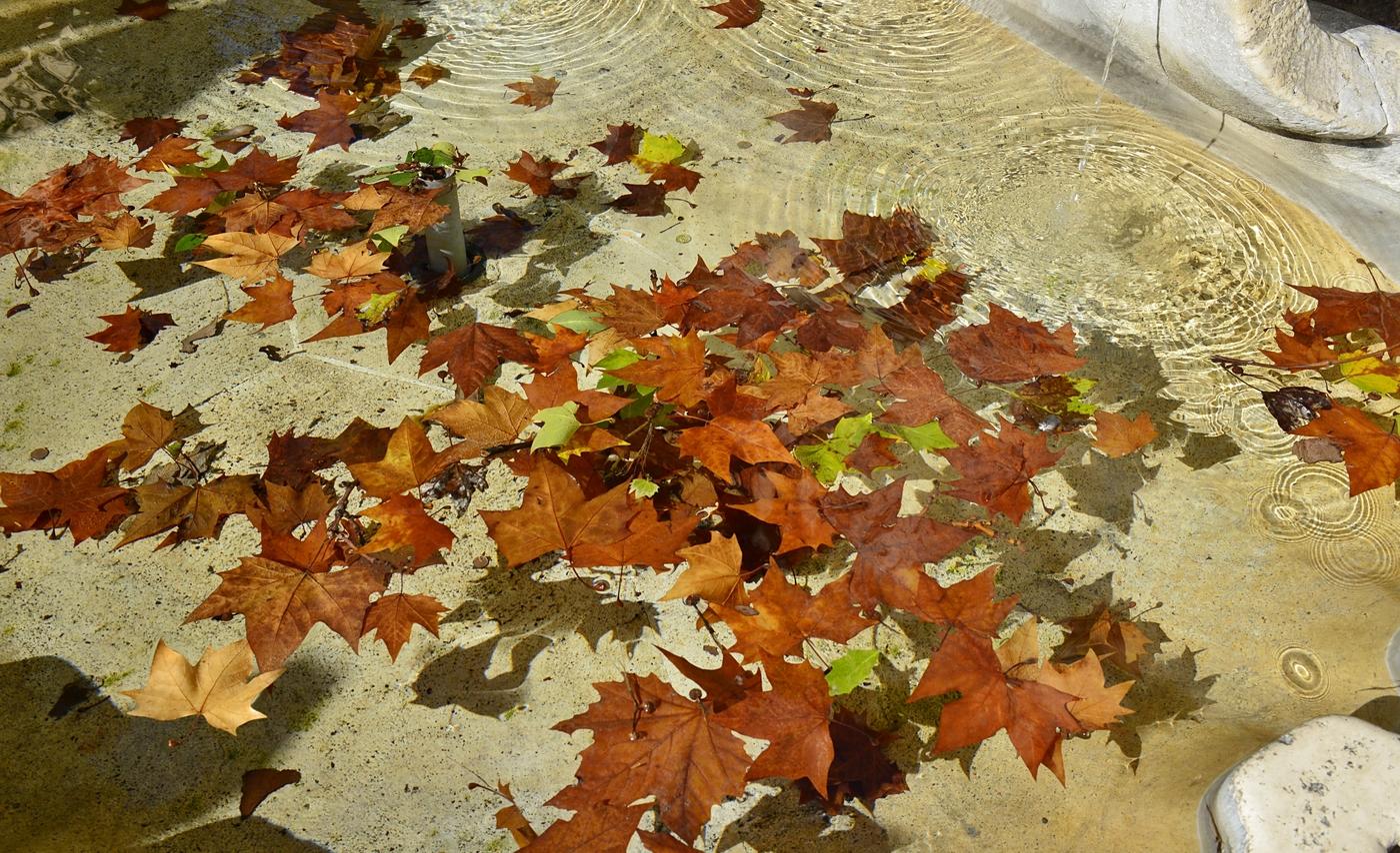Listí na vodě